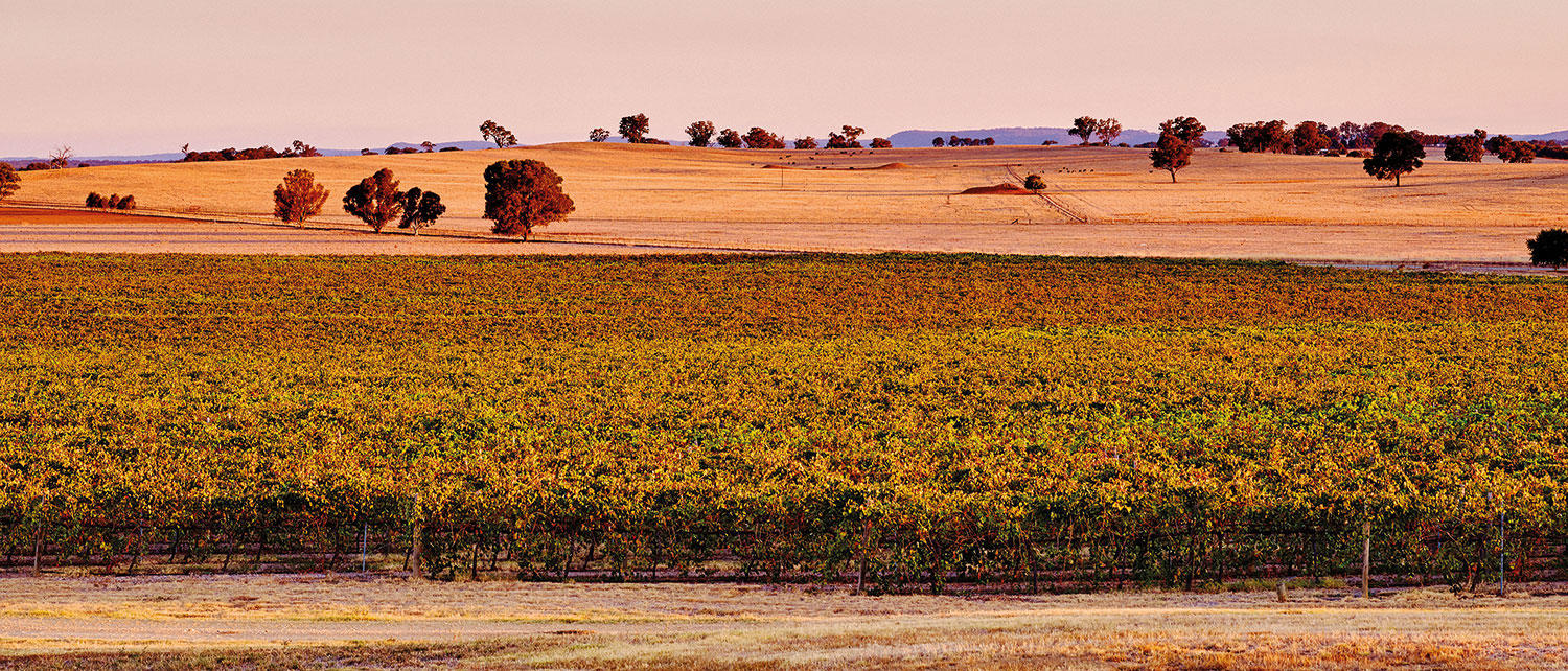 Rutherglen_Estates_Vineyard